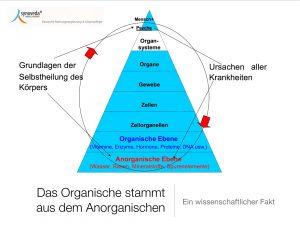 Die 8 Organisationsebenen des menschlichen Körpers