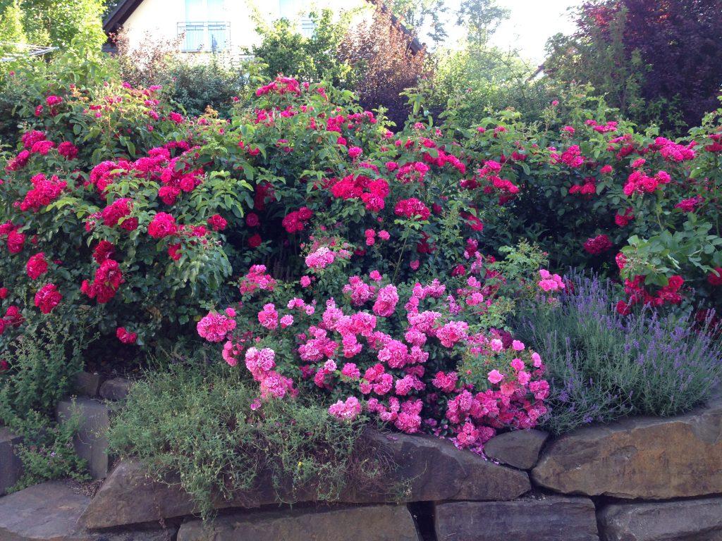 Mineralstoffe und Spurenelemente für Pflanzen - ein Selbstversuch: Juli 2016