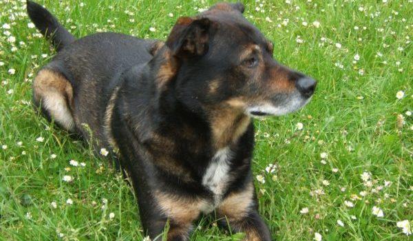 Unser Hund – Lucky